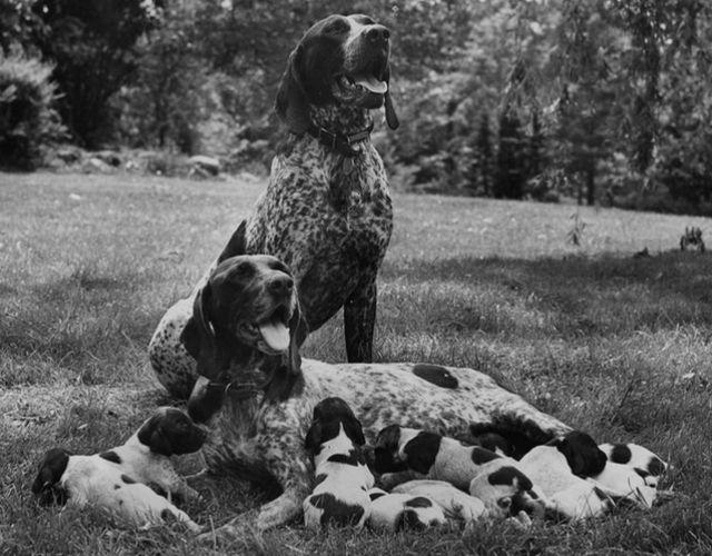 Vinatge Dogs