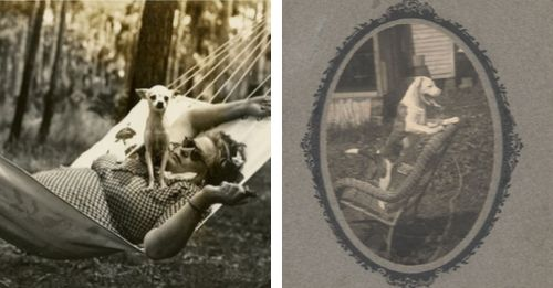 Vintage Dog Photos