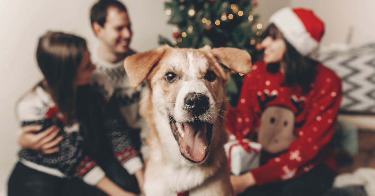 25 Hot Christmas Gifts for Dog Lovers That Will Sell Out Before Thanksgiving