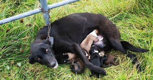 mom & puppies