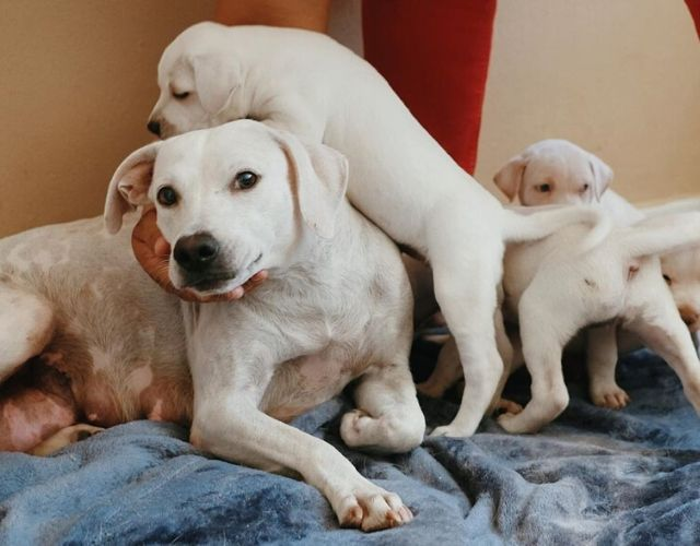 mama rescue