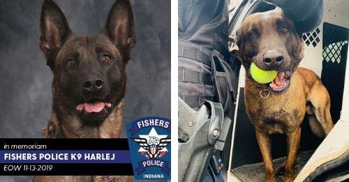 officer harlej