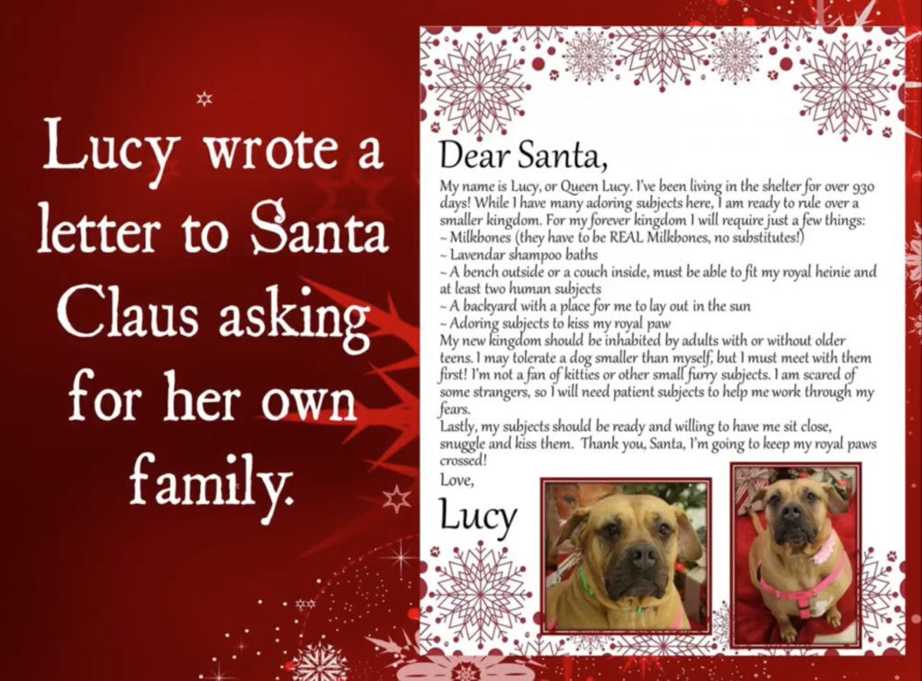 Dog At Shelter 900+ Days Asks Santa For A Home