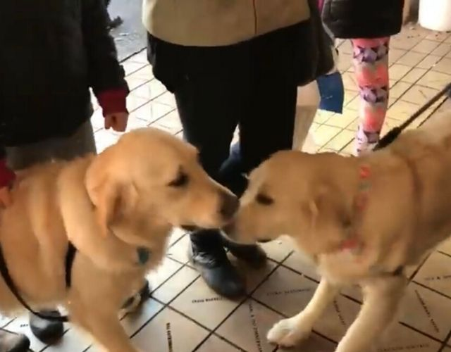 sibling reunion