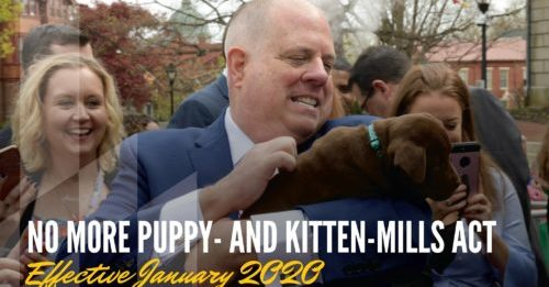 Maryland Passes Law Banning Puppy Mills