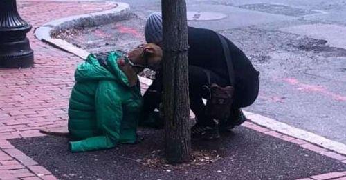 dog in coat cover