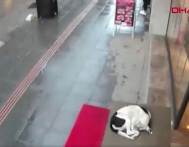 dog scarf