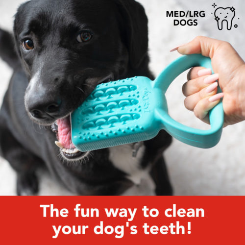 Special Offer! Brush Tuggy™ Dental Play Tool – The Fun Way To Brush Your Dog's Teeth!