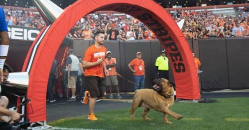 Cleveland Browns Doggie Mascot Dies At 6 After Battle With Cancer