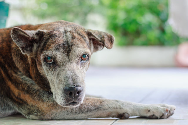pain relief for dog