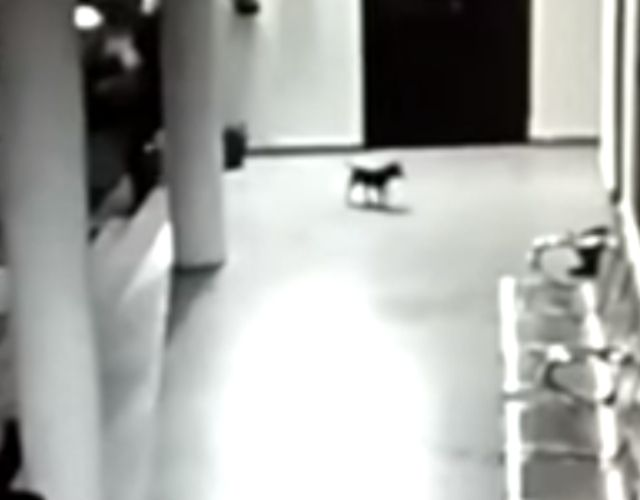 leopard dog rescue