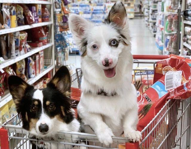 target puppy