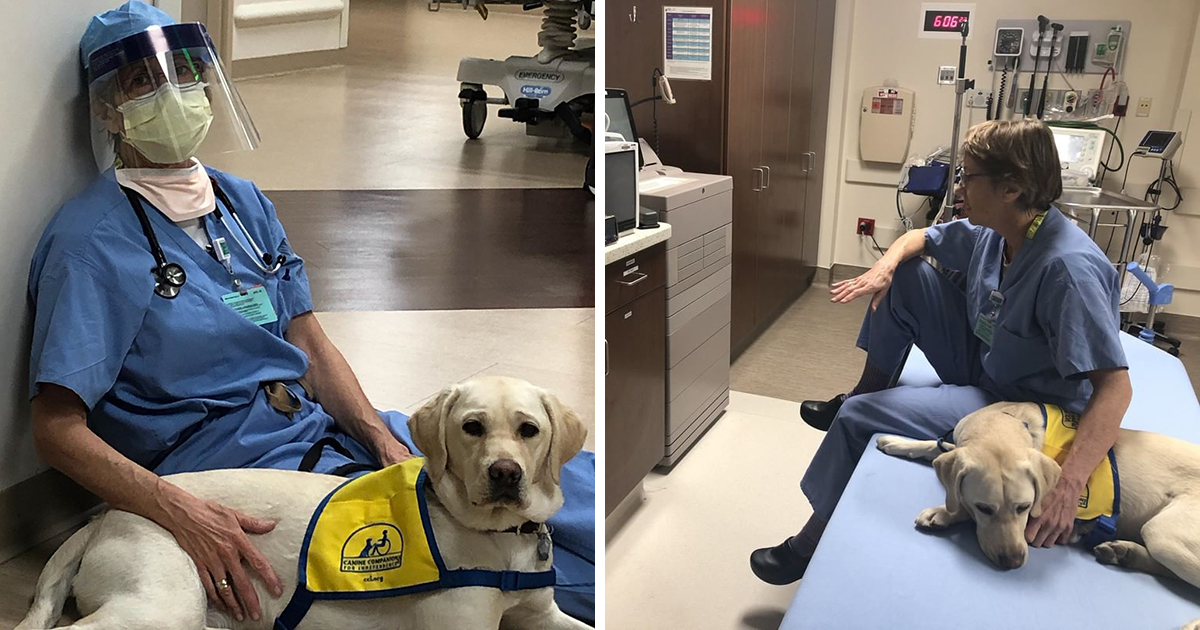 Therapy Dog Comforts Medical Staff On Frontline Of COVID Pandemic