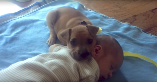 Abandoned Puppy Finally Finds Comfort With Human Baby