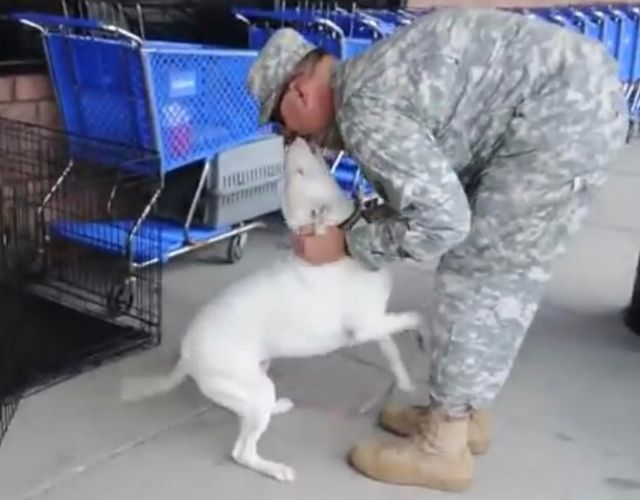 deaf dog soldier photo