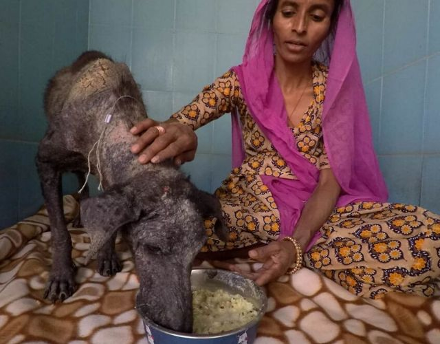 indian dog photo