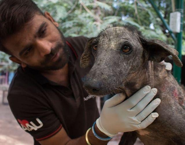 indian dog photos