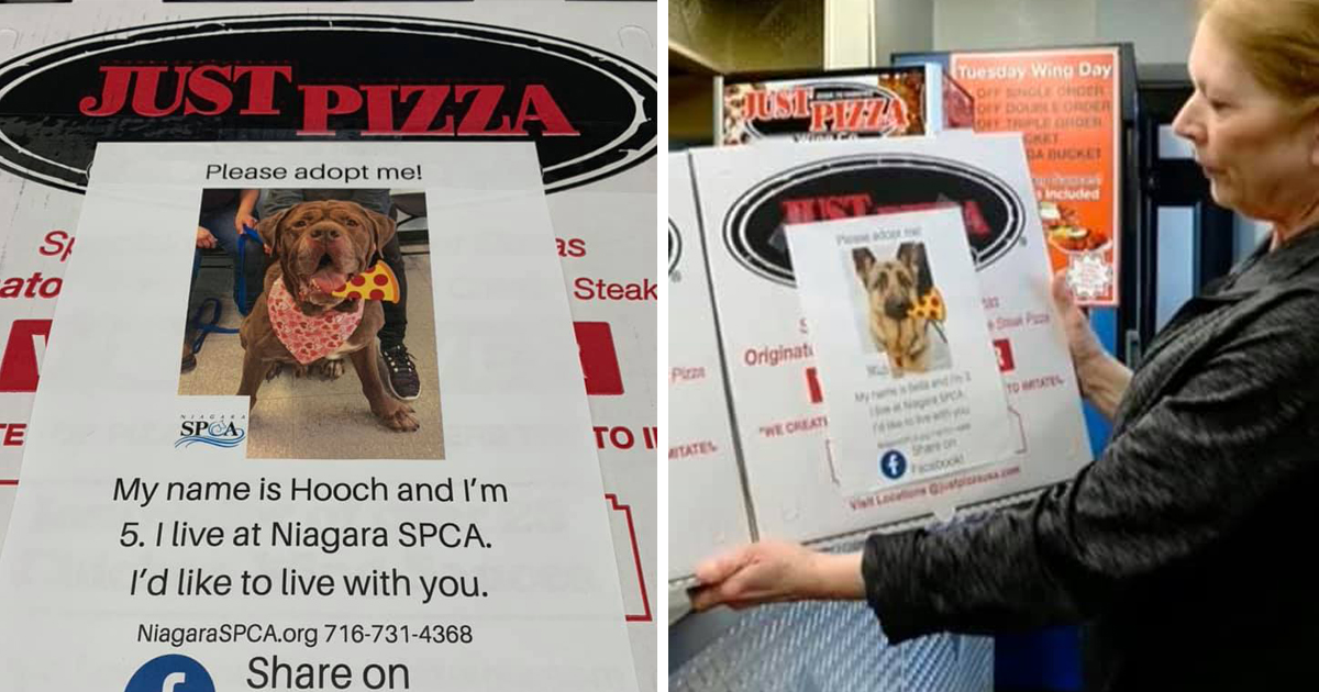 Pizza Boxes Featuring Shelter Dogs Are Getting Pups Adopted