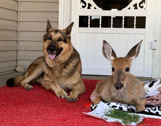 https://iheartdogs.com/wp-content/uploads/2020/04/orphan-fawn-photos.jpg