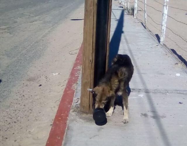 san felipe dogs