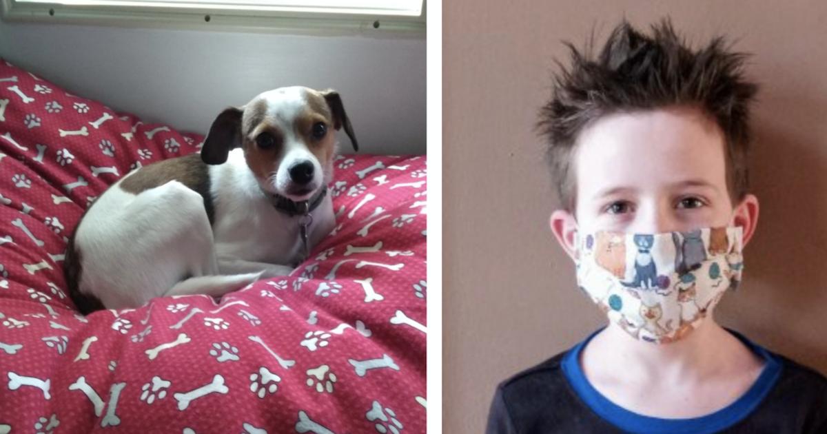 8-Year-Old Sews Masks And Donates Profit To Animal Shelter