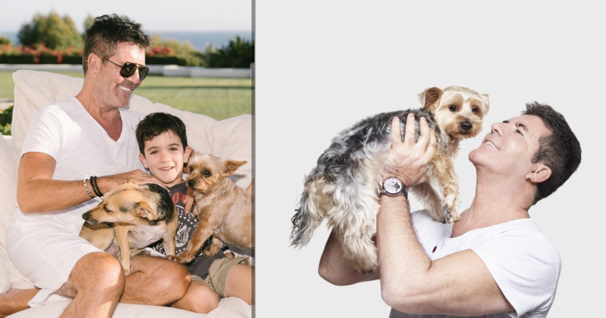 Simon Cowell Donates Massive $400,000 To Help Shelter Dogs by Molly Weinfurter Facebook