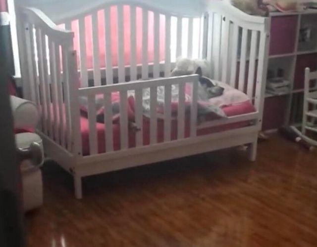 dog sleeping with child