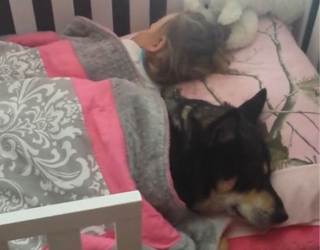 dog napping with child