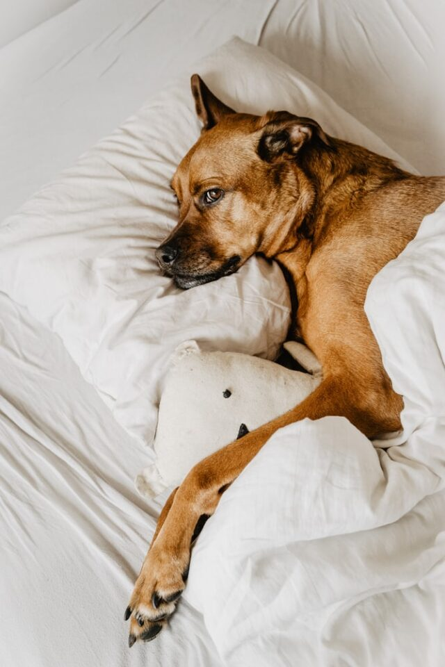 Are You A Foot Fondler Or A Pillow Pilfer? The Secrets To Sleeping Positions!