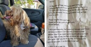 stray dog with note