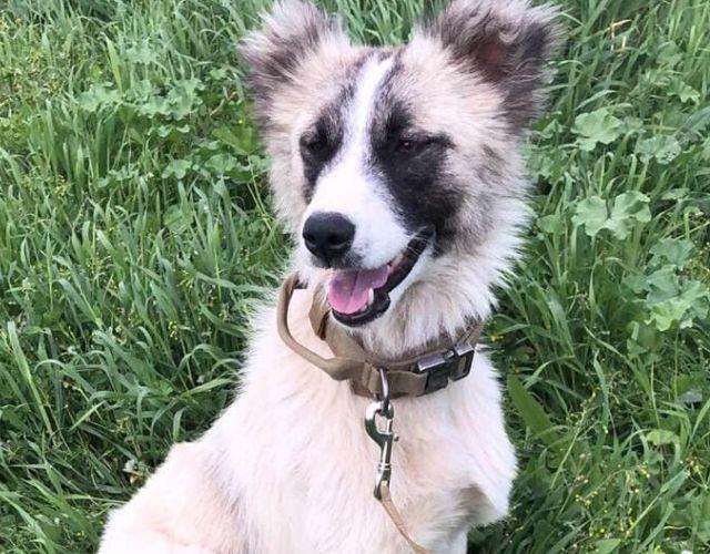 syrian rescue dog
