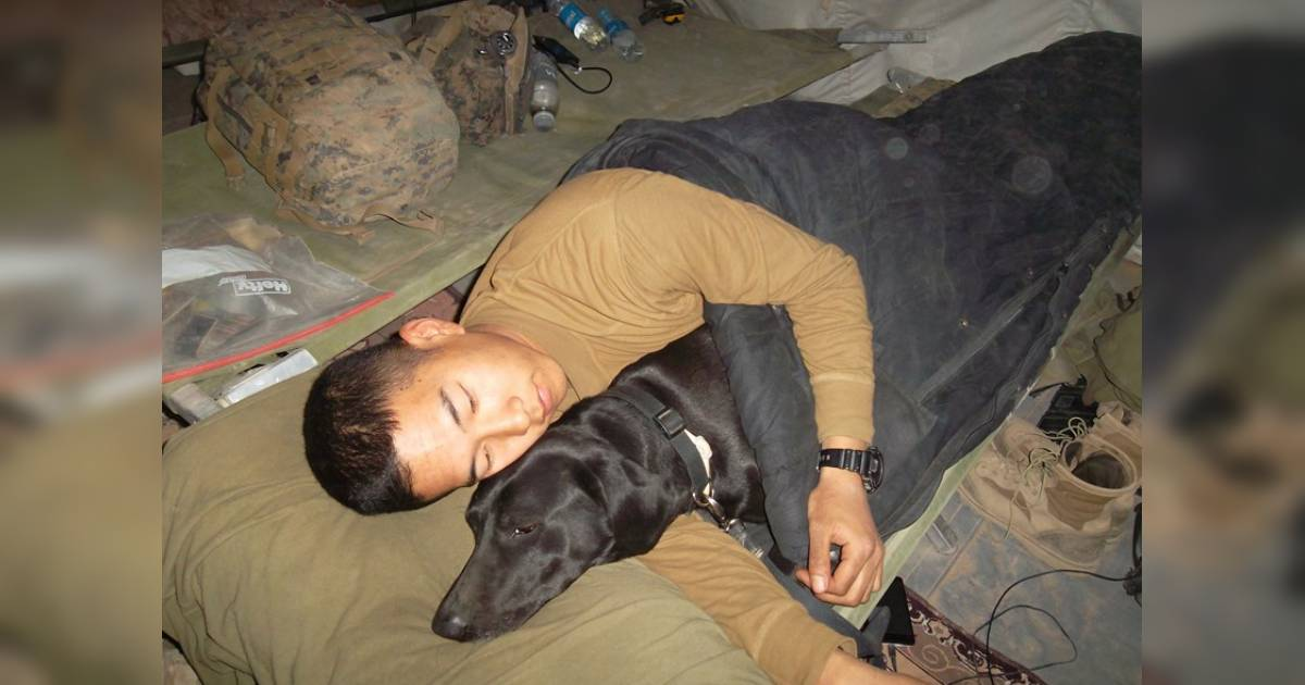 Veteran Adopts Detection Dog Who Protected Him In Afghanistan
