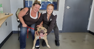 Pit Bull Reunited with Family