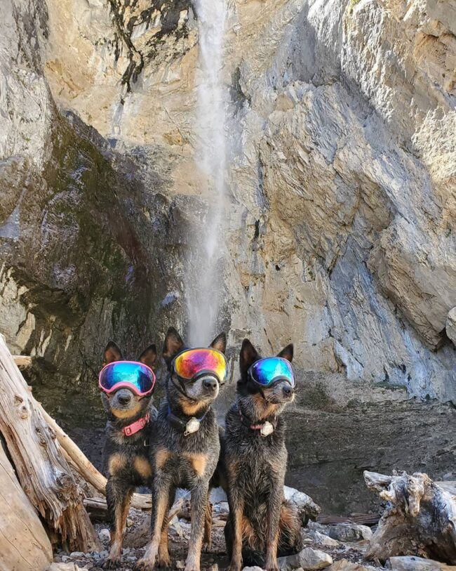 Dogs with goggles near waterfall