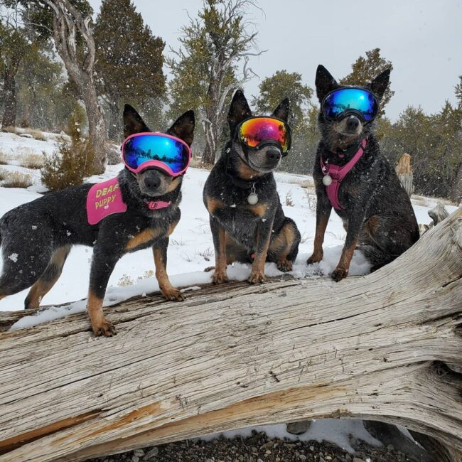 dogs with goggles on tree