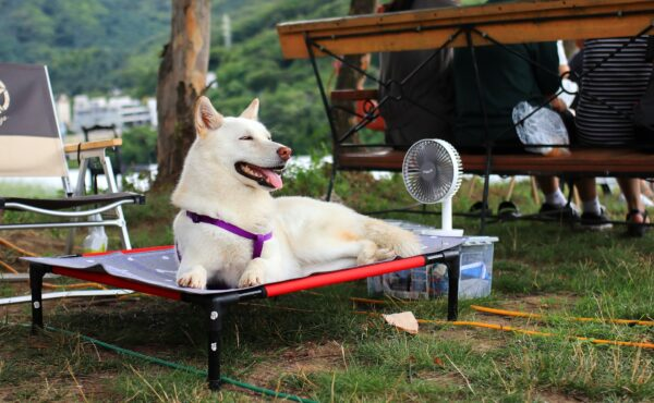 dog cooling off to prevent heat stroke