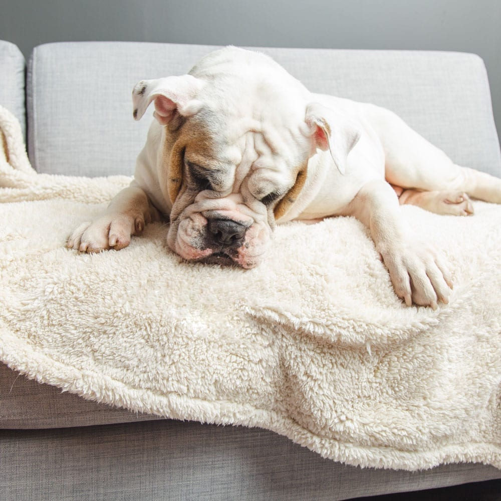 Image of Give Warmth™️ Buy One Give One Sherpa Premium Dog Blanket 🎄 Deal 26% Off!