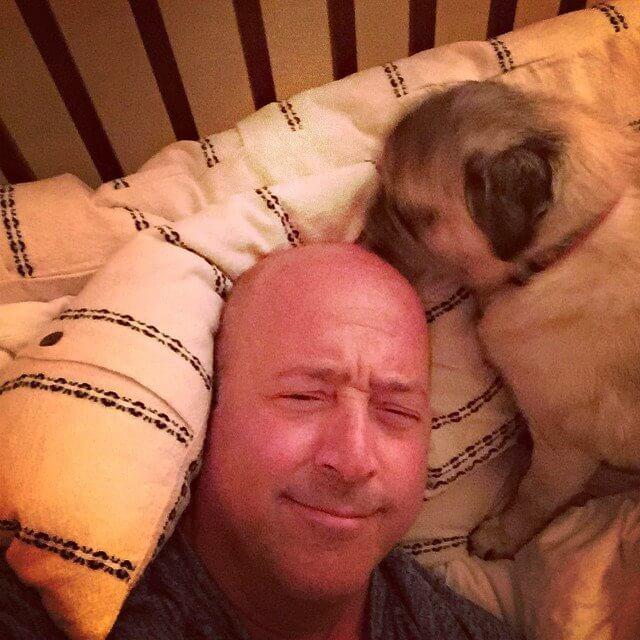 Pug Licking Bald Head