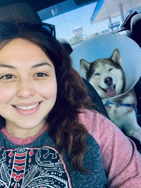 Injured Husky in Car