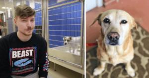 MrBeast Adopts Dogs