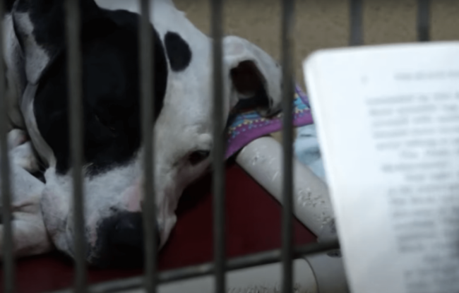 shelter dog being read to