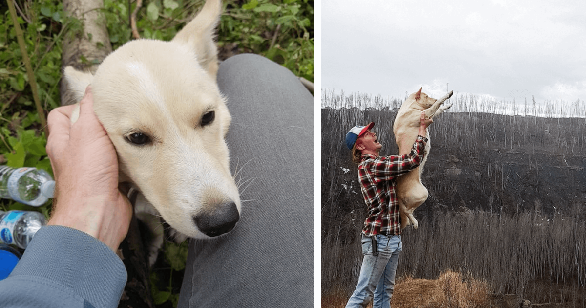 Dog With Broken Legs Saved By Man Who Found Her In The Woods