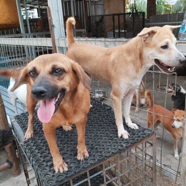 shelter dogs standing on crate