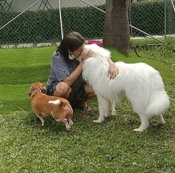 woman hugging dogs