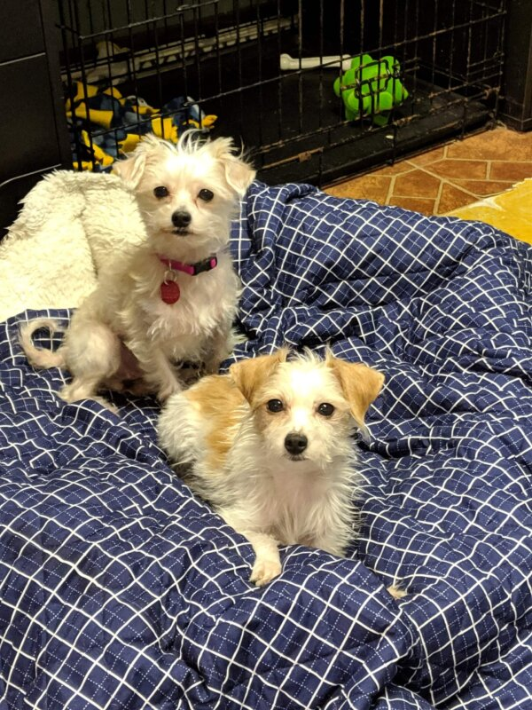 Two Rescued Dogs
