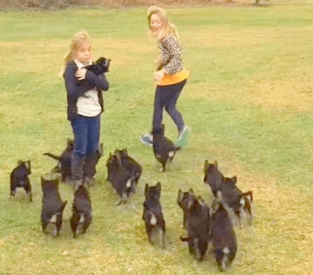 German Shepherd puppies and little girls