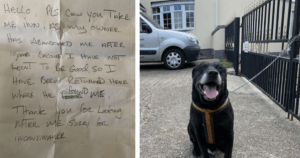 Abandoned Dog With Note