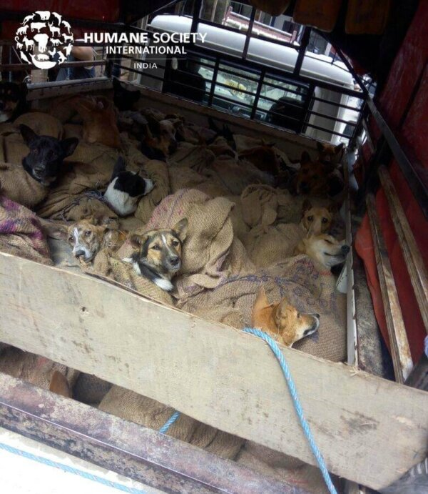 Dog meat trade pen