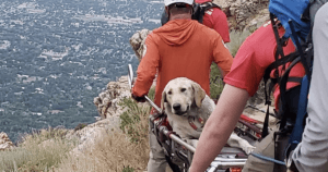 Dog Mountain Rescue