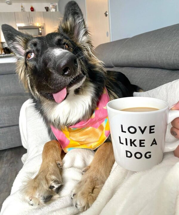 Rescue Dog with Coffee Cup